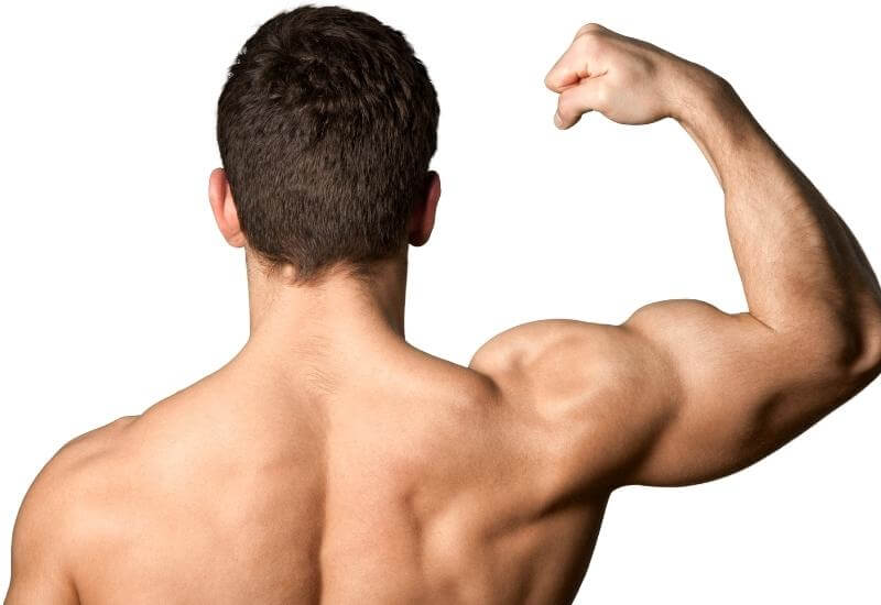 A Muscles